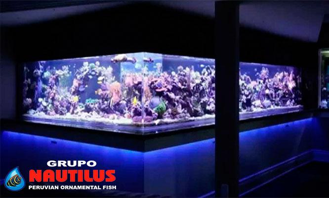 Acuario nautilus entrada para ni o o adulto alimento for Alimento para peces acuario
